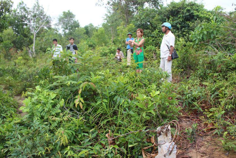 Đất rừng sản xuất là một loại đất nông nghiệp