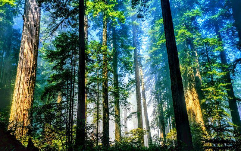 Đất rừng sản xuất được phân chia thành 2 loại khác nhau