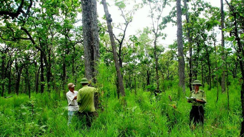 Nếu sử dụng dất rừng sai mục đích sẽ bị phạt rất nặng
