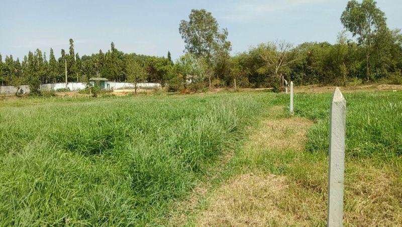 Đây là một loại đất nông nghiệp